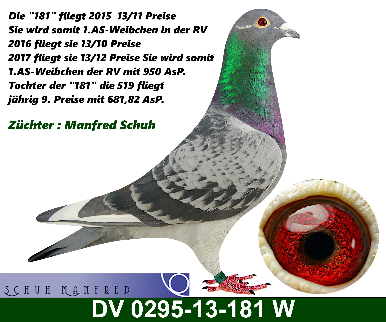 0295-13-181w