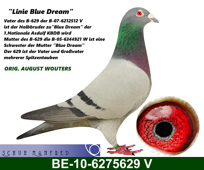 BE 10 6275629v